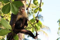 凛々しい猿