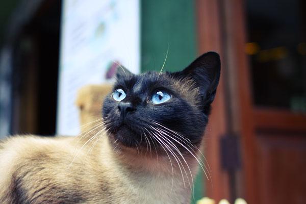 マチュピチュの猫